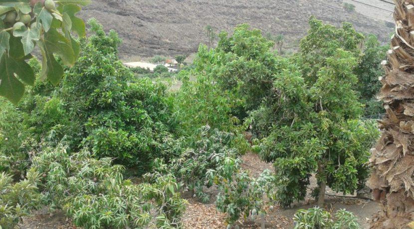 finca trees